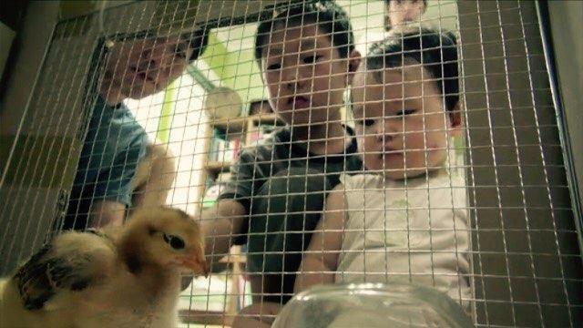 하나뿐인 지구(HD) [닭 한 마리 키워 보실래요?]