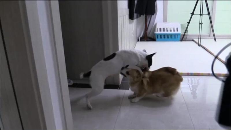 세상에 나쁜 개는 없다 [26화. 위험한 동거, 베로와 레오]