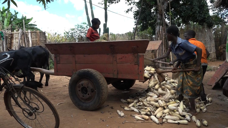 글로벌 프로젝트 나눔 [모잠비크, 가난에 갇힌 고아 남매]