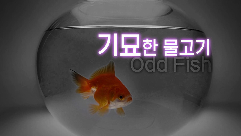 지식채널e [기묘한 물고기]