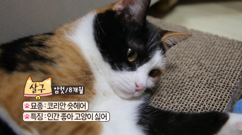 고양이를 부탁해 [짱구와 살구 싶어요]