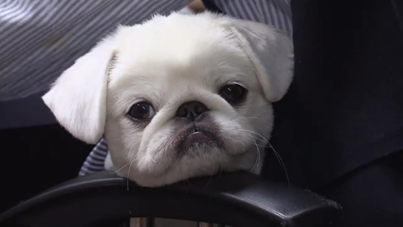 세상에 나쁜 개는 없다 [김빵꾸 사원이 왜 그럴까]