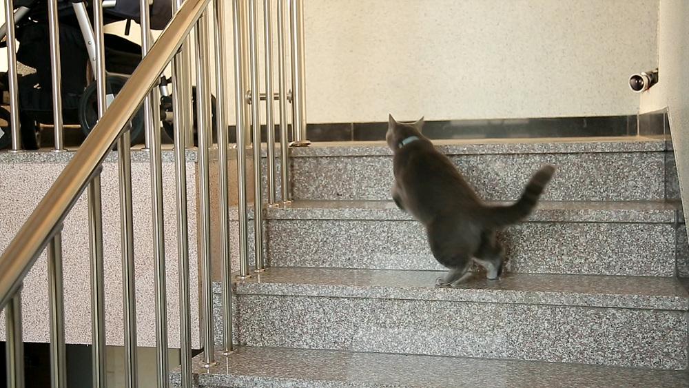 고양이를 부탁해 [루디는 잠시 탈출 중입니다]