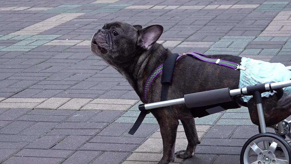세상에 나쁜 개는 없다 [장애견이라도 괜찮아]