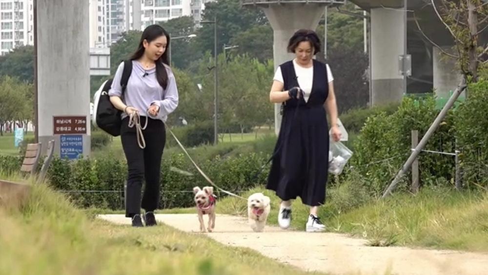 세상에 나쁜 개는 없다 [광란의 우디, 독한 녀석이 나타났다!]