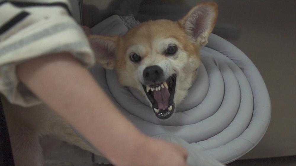 세상에 나쁜 개는 없다 [긁어야 사는 개, 자해견 땅콩이]