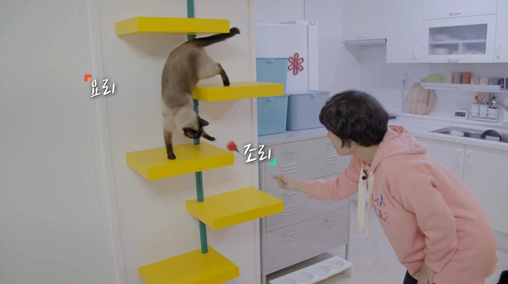 건축탐구-집 [개와 고양이를 부탁해]