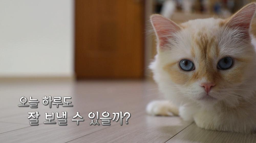 고양이를 부탁해 [샤이, 프롬이의 내겐 너무 바쁜 집사]
