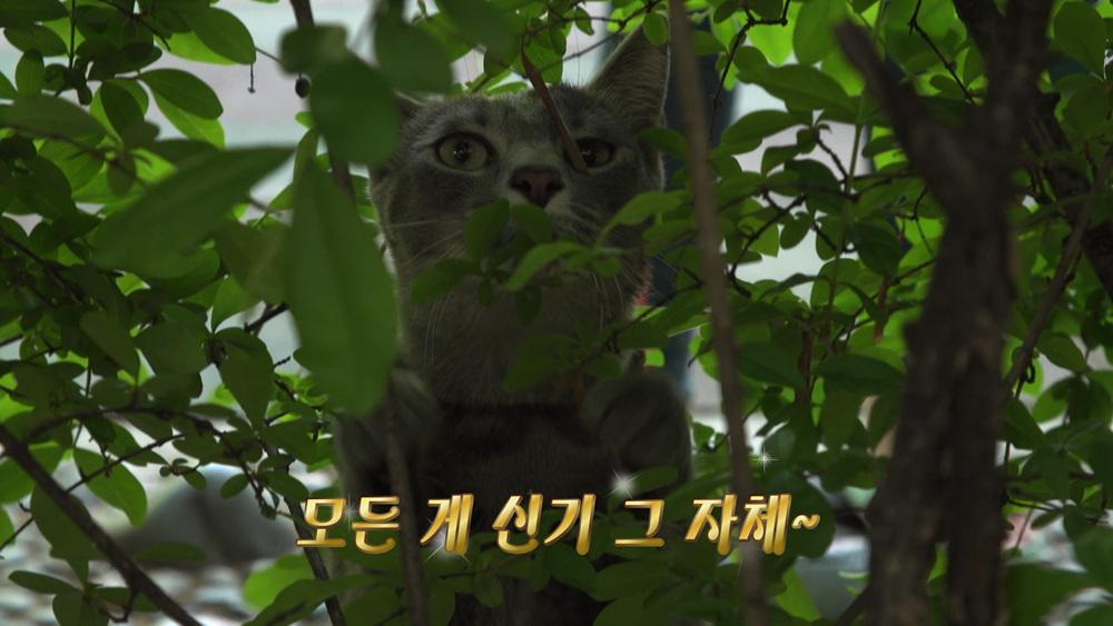 고양이를 부탁해 [산책을 꿈꾸는 냥?!]