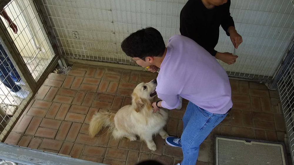 세상에 나쁜 개는 없다 [천방지축 레인이의 두 얼굴]