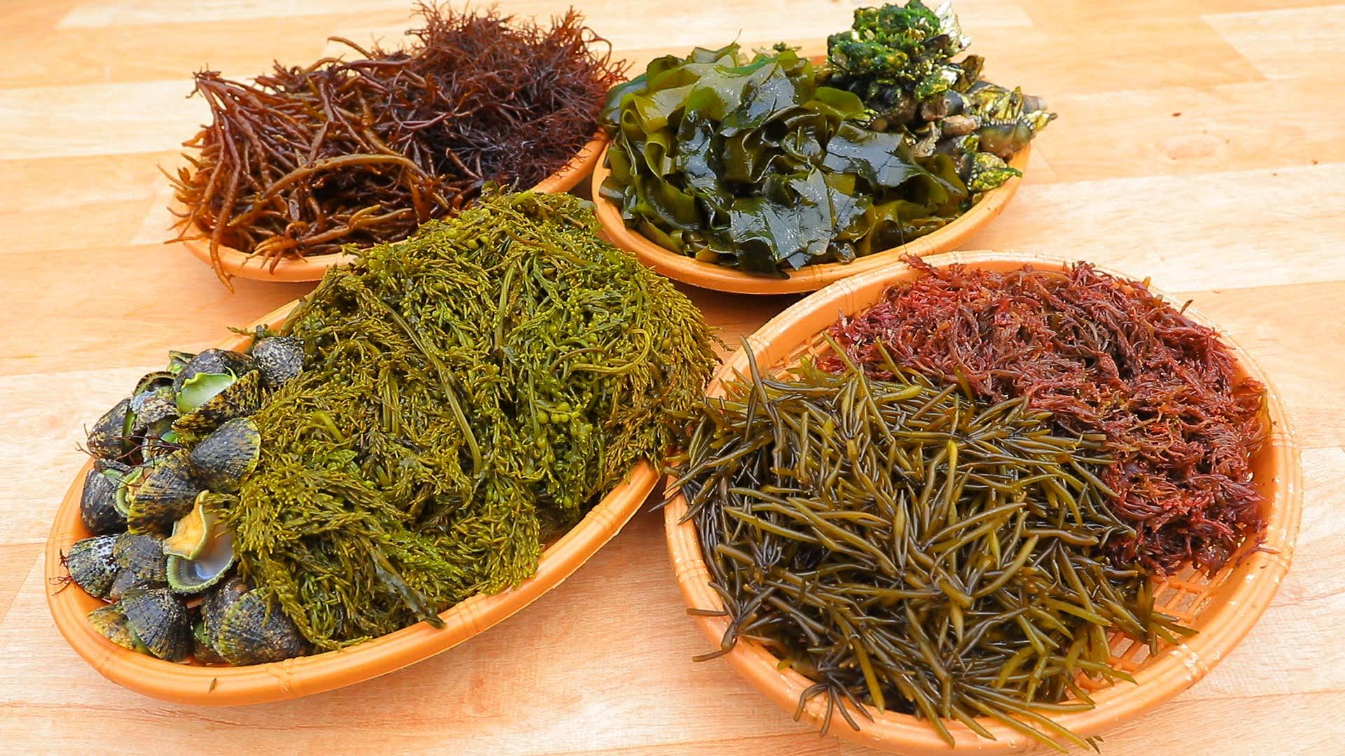 한국기행-섬마을 밥집 [2부. 그 섬에서 뭐 먹지? ]