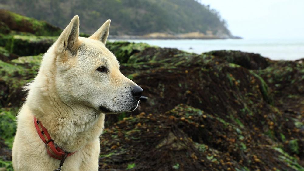 한국기행 [시선기행, 나는 犬이다 2 - 이 섬에 놀러 오시 '개']