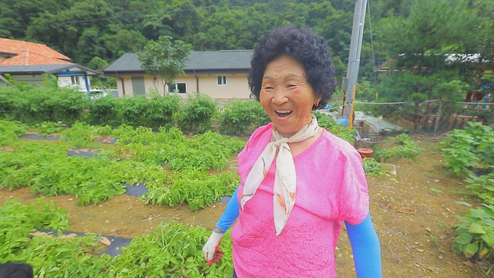 한국기행 [여름에는 무작정  1부. 주왕산, 물 따라 걷다 보면]