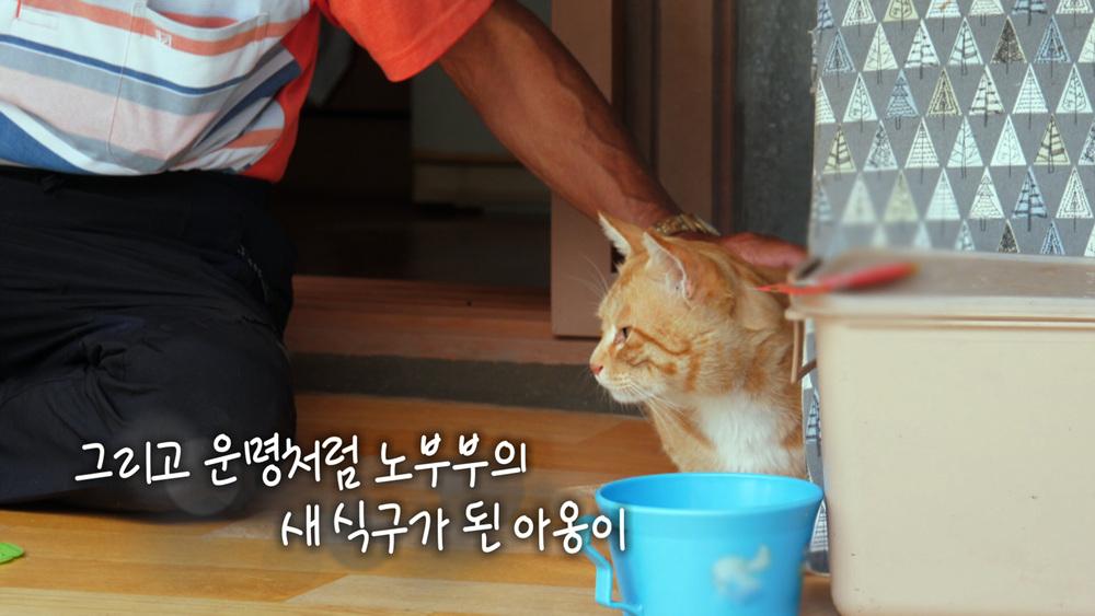 고양이를 부탁해 [아옹아 아옹아]