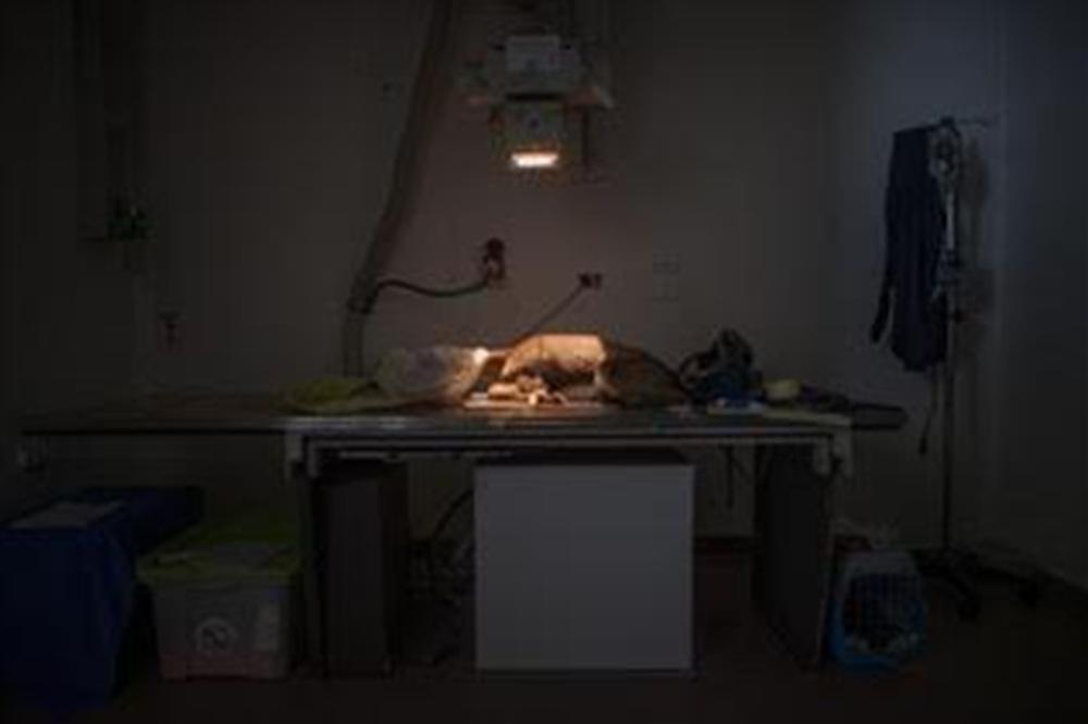 EIDF2019 [야생동물병원 24시]