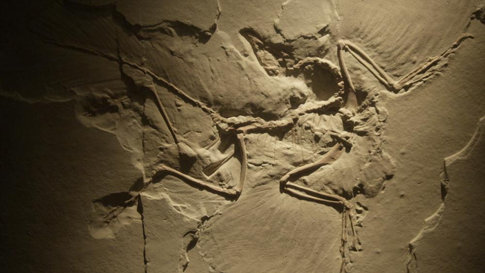 과학 다큐멘터리 [3억 년, 유럽 대륙 탄생의 비밀 2부. 인간의 등장]
