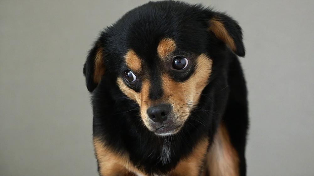 세상에 나쁜 개는 없다 [TV 보고 짖는 개, 몽이]