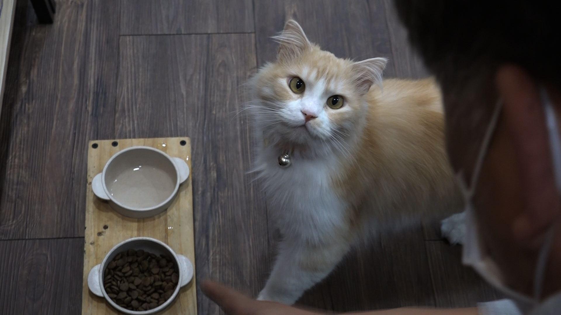 고양이를 부탁해 [간식 도둑냥 햇님이]
