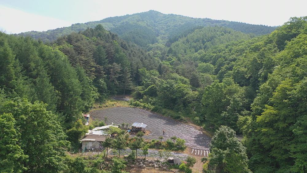 한국기행 [즐거워라, 여름놀이 5부. 자연이 좋아 여기에]
