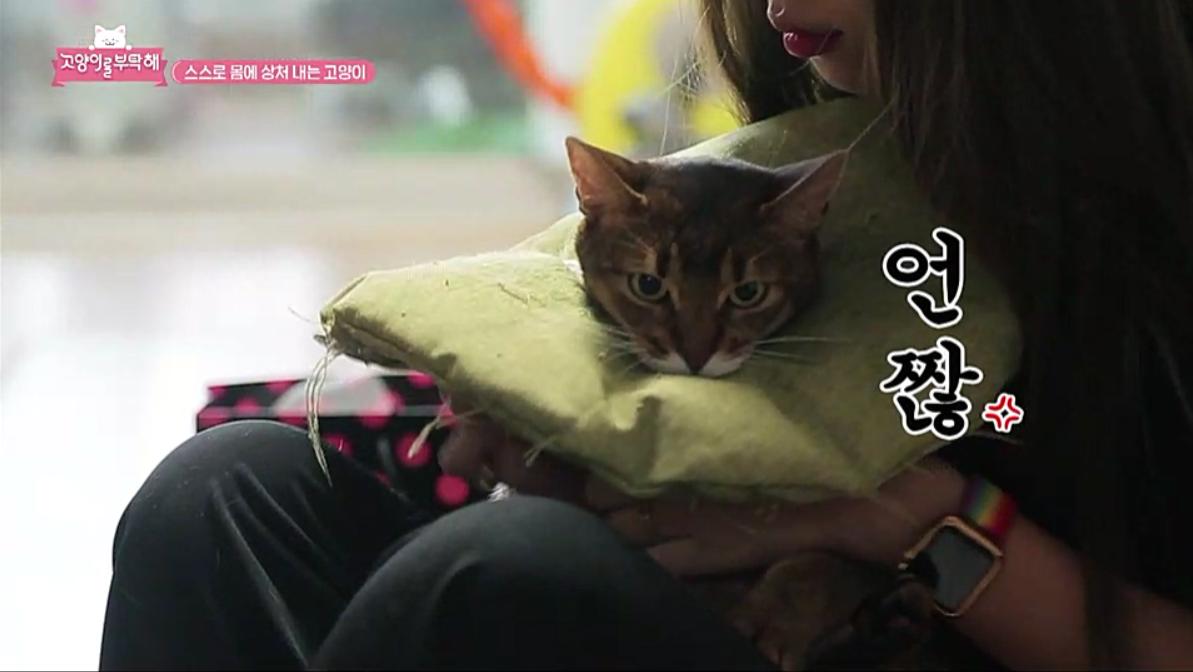 고양이를 부탁해 시즌5 [털 뜯는 고양이 로미의 속사정]
