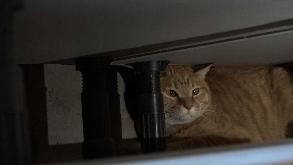 고양이를 부탁해 [내 옷장 속의 고양이]
