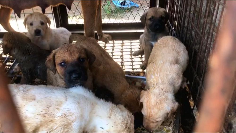 세상에 나쁜 개는 없다 [계양산 식용견 161마리를 구해줘!]