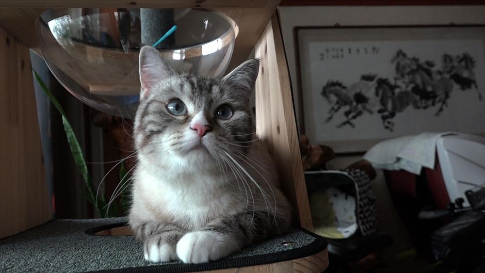 고양이를 부탁해 [목표는 누나다! 막무가내 망무]