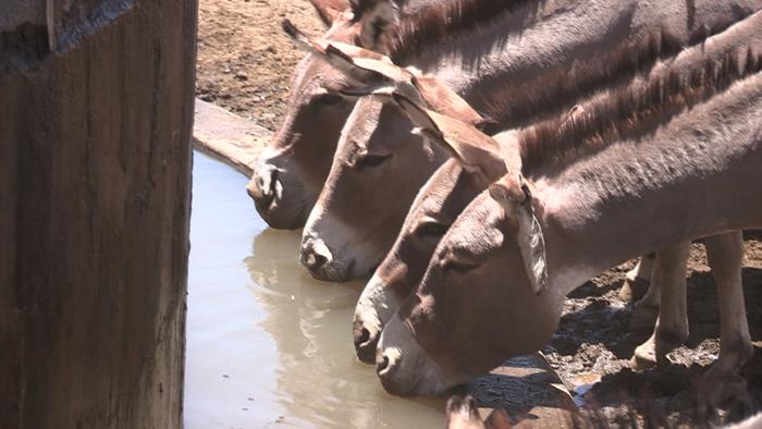 인류 원형 탐험 - 태양 바람 물 그리고 케냐 마가디 마사이족