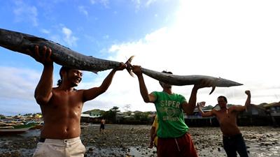 세계테마기행 - 모험의 땅,필리핀 3부 태평양의 보물섬, 마스바테