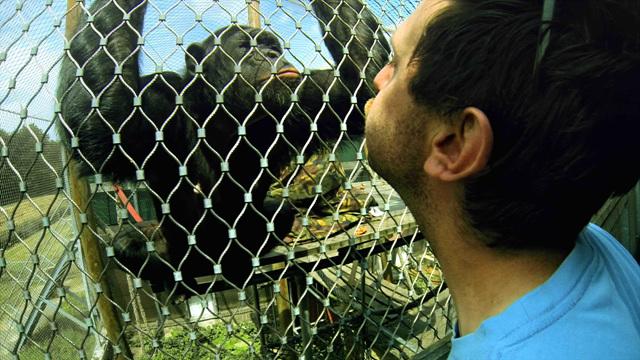 EIDF 2015 침팬지 콤플렉스 - EIDF 2015 침팬지 콤플렉스
