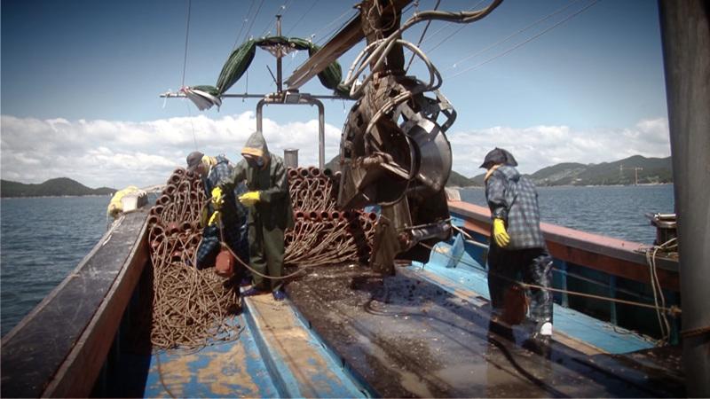 극한 직업 - 전통 문어 잡이