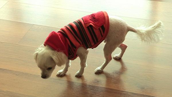 세상에 나쁜 개는 없다 - 바닥을 무서워하는 개 미키