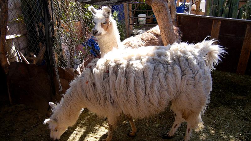 세계테마기행 - 안데스의 영혼을 찾아서, 칠레 2부 사막 여행의 메카, 아타카마