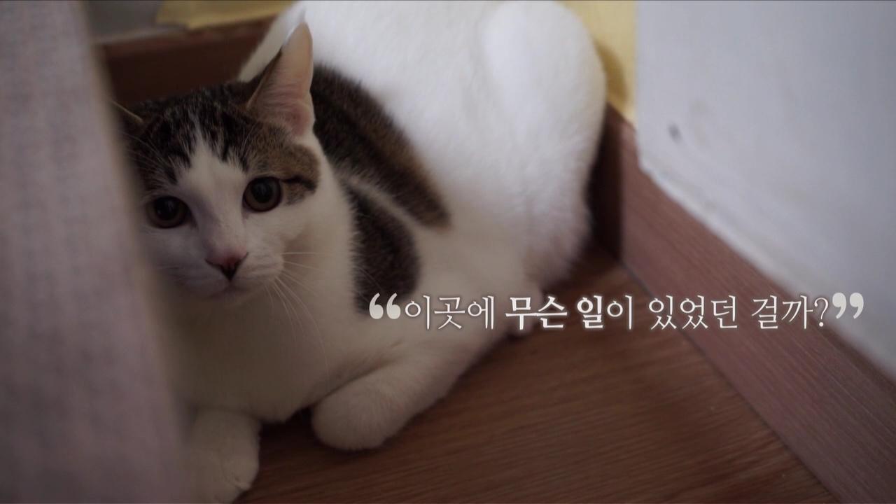 고양이를 부탁해 [프로듀스 제로]