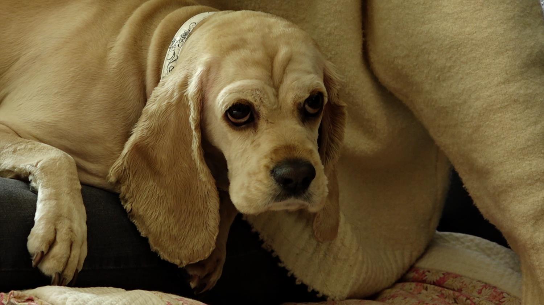세상에 나쁜 개는 없다 - 초 예민 보스 성난 보리의 속사정
