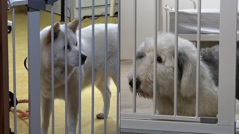 세상에 나쁜 개는 없다 [큰 개들의 살벌한 전쟁]