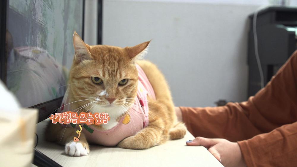 고양이를 부탁해 [뚱냥이 나방, 다이어트는 내일부터?!]