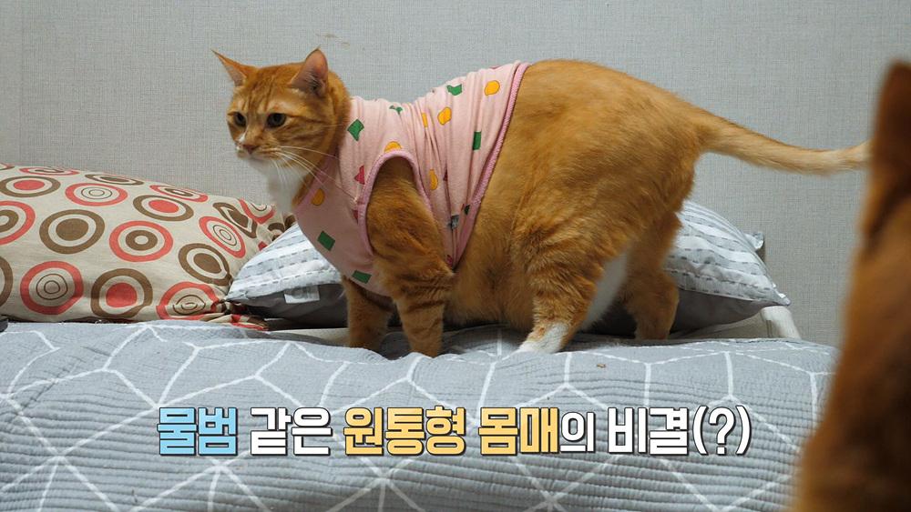 고양이를 부탁해 1부 - 뚱냥이 나방, 다이어트는 내일부터?!