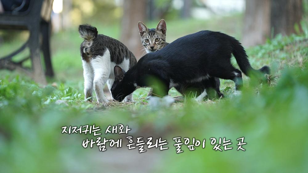 고양이를 부탁해 1부 - 길에서 만난 사이