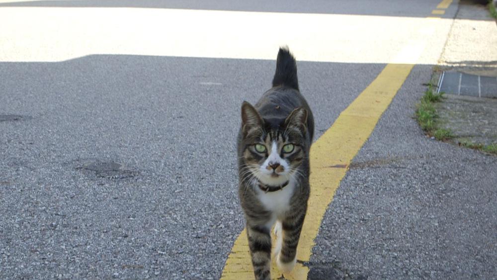 고양이를 부탁해 1부 - 어서오세요 마당반점입니다