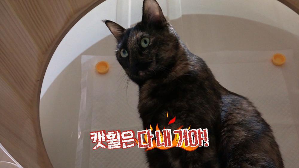 고양이를 부탁해 1부 - 집착묘 응꼬의 캣휠은 내 운명