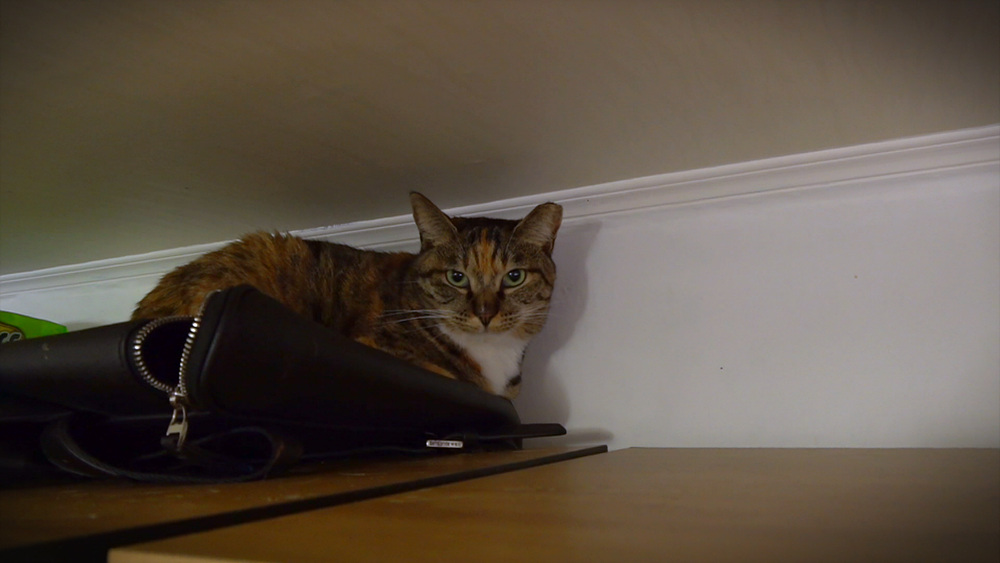 고양이를 부탁해 [옷장 위의 고양이, 시에를 구하라!]