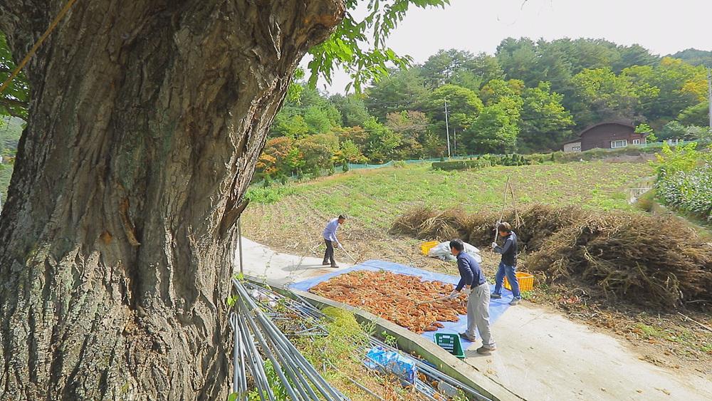 한국기행 - 가을산 표류기 3부 인제, 가을 소리를 따라서