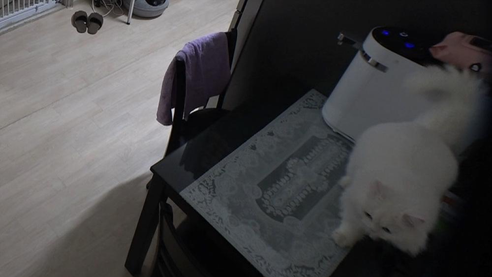 고양이를 부탁해 1부 - 정의의 마징가, 문제투성이 제트
