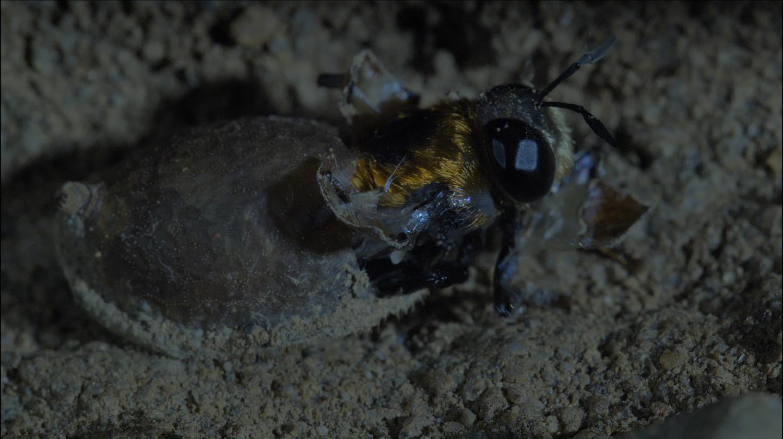"""다큐프라임 [비밀의 왕국 - 2부 위험한 동거 """"간 큰 도둑! 호개미성 곤충들의 생존전략""""]"""