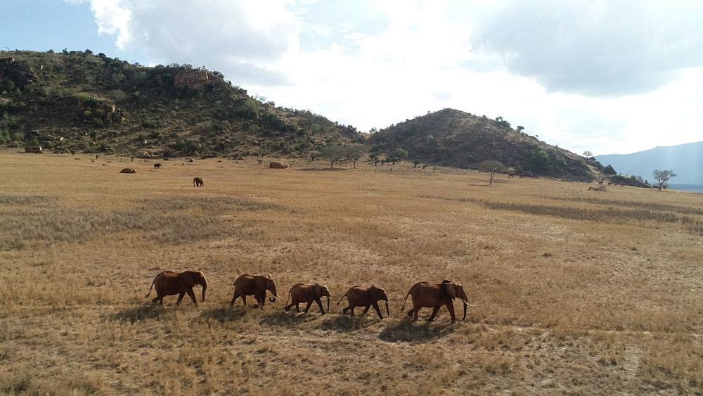세계테마기행 - 이상하고 아름다운 아프리카  4부 아웃 오브 아프리카 케냐