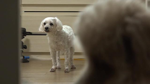 세상에 나쁜 개는 없다 - 설움 폭발 한성이의 왕따 탈출기