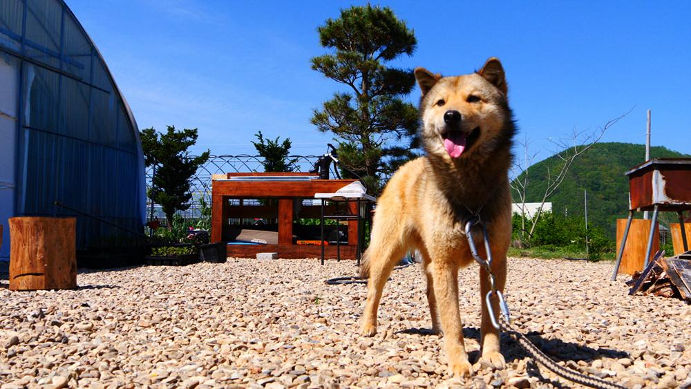 한국기행 - 시선기행, 나는 견(犬)이다2 4부 밤바와 요다, 여행을 떠나 '개'