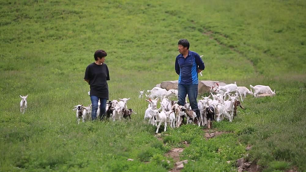 한국기행 - 나의 친애하는 동물 친구들 3부 저 푸른 초원 위에