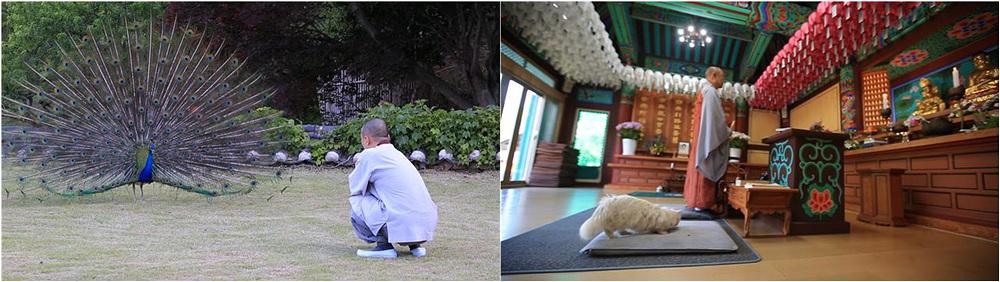 한국기행 - 나의 친애하는 동물 친구들 4부 기묘한 동거